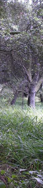 vert_tree